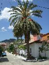 Palme unterhlab des Klosters von Sarti