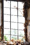 Fenster einer Ruine